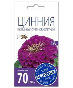 Лц/цинния Ежевичный джем (пурпурная) О*0
