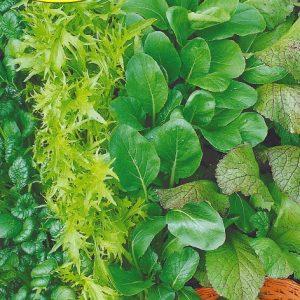 Семена Японский салат изображение