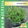 Семена Микрозелень Кориандр (кинза) изображение
